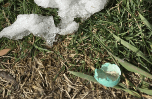 broken blue shell and melting snow